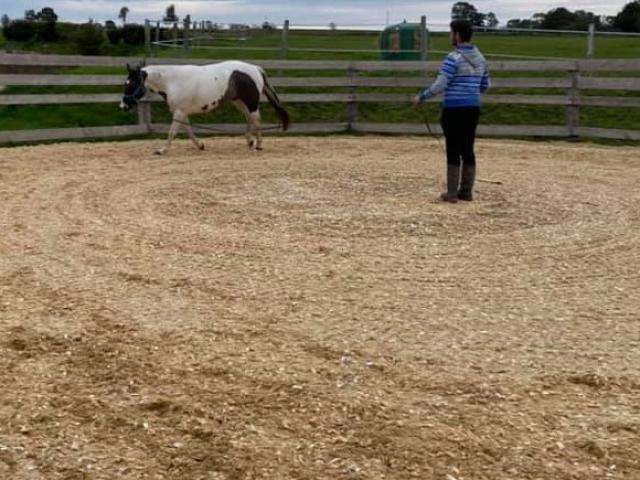 Rond de longe fibré et drainé pour longer votre cheval en toute sécurité